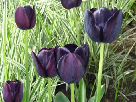 Букет олигарха к 8 марта: названы самые дорогие цветы мира