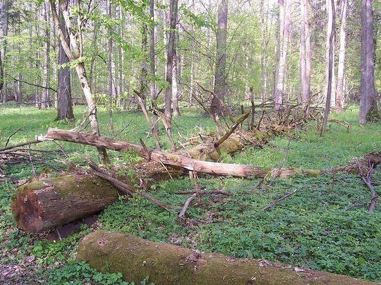 Власть решила легализовать сбор валежника для оставшихся без дров россиян