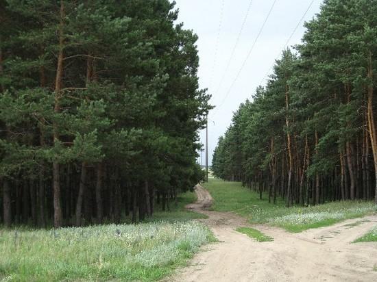 В Воронежской области высадят 2100 га леса
