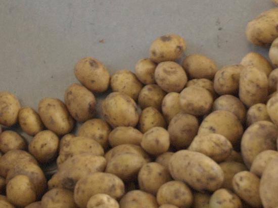 Ученые вырастили картошку в марсианских условиях
