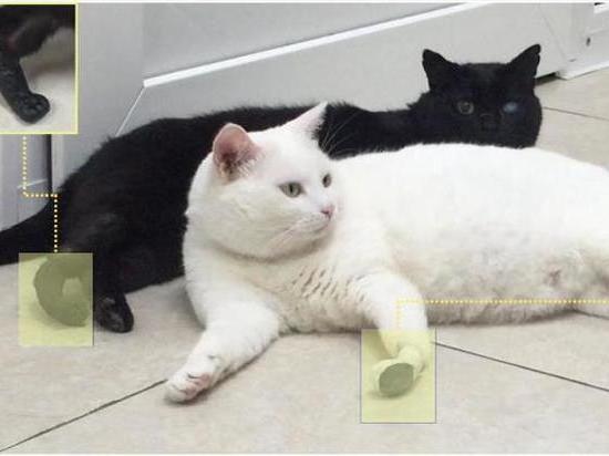 В России появились первые коты с имплантированными конечностями