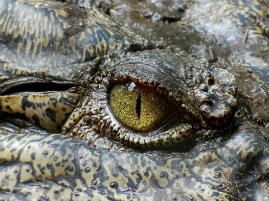 Люди произошли от рептилий: СМИ неверно истолковали недавнее научное открытие