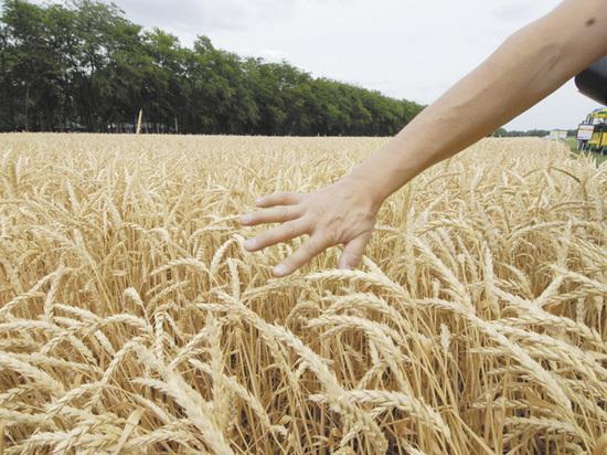 Турция решила шантажировать Россию пшеницей и помидорами