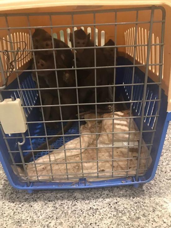 В аэропорту Домодедово у пассажирки изъяли 15 обезьян
