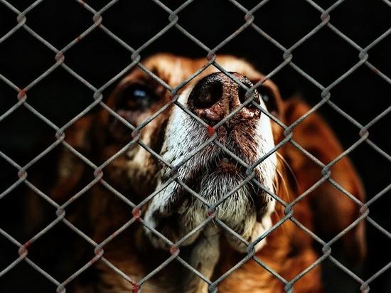 Две собаки погибли предположительно после изнасилования в пермском приюте