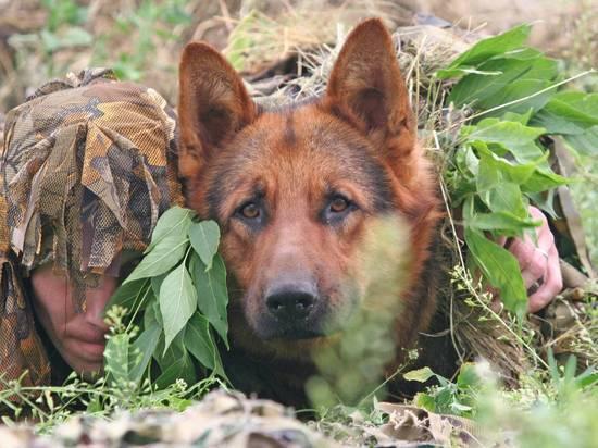 Прятавшихся убийц астраханских полицейских учуяла служебная собачка