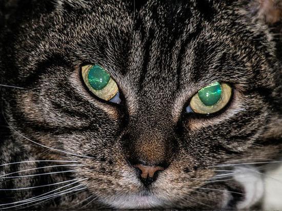 Ветеринар пояснил, кто из животных видит в темноте