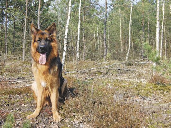 Собака весной: на что обратить внимание в межсезонье
