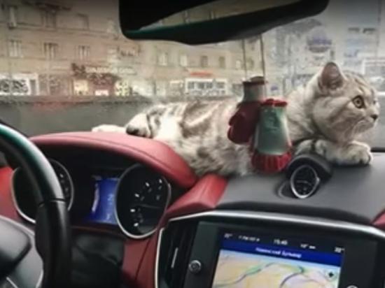 В салоне сгоревшего в Москве Maserati могла быть кошка