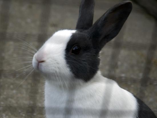 Кроликам в контактных зоопарках предоставят время для отдыха от ласки