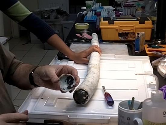Биологи поймали и запечатлели на видео гигантского моллюска-червя