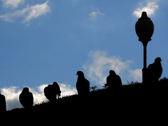 Музей Екатеринбурга ищет распугивателя голубей и сотрудника из «Властелина колец»