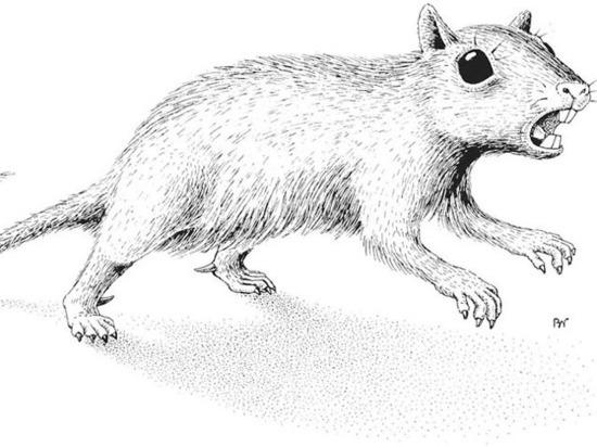 Российские ученые рассказали, почему найденного предшественника хомяка назвали Байдабатыр