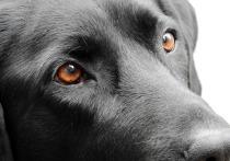 Отвергнутый любовник украл у москвички собаку, чтобы отомстить