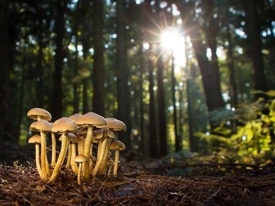 Русские ученые-биологи обучили грибы светиться всеми цветами радуги