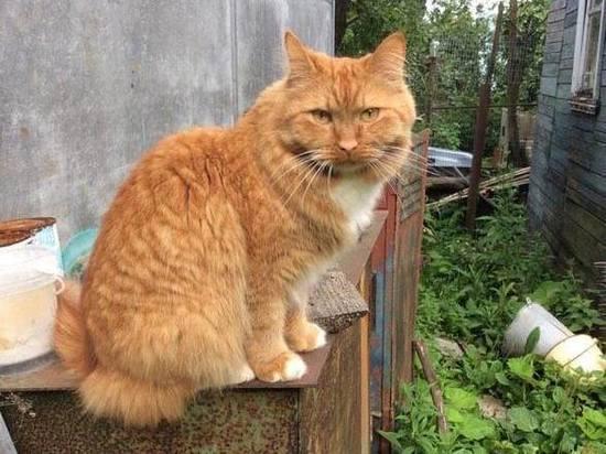 Коты-«двоеженцы»: прототипы новозеландского мачо найдены в России