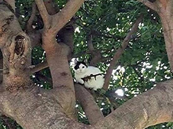 Кот-«снайпер» развеселил американских полицейских
