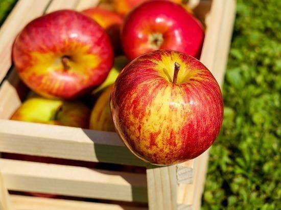 Диетологи: свежие яблоки спасают от диабета и болезней сердца