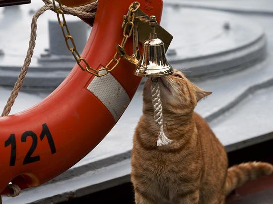 Минобороны рассекретило боевого кота Сергея Ивановича, ходившего в Сирию