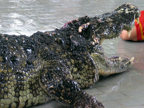 Напавшего на десятилетнюю девочку во Флориде аллигатора усыпили