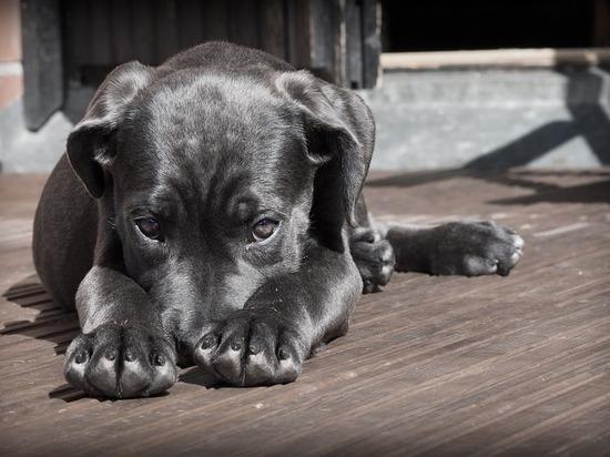 Животный страх: почему нельзя оставлять собак привязанными у магазина