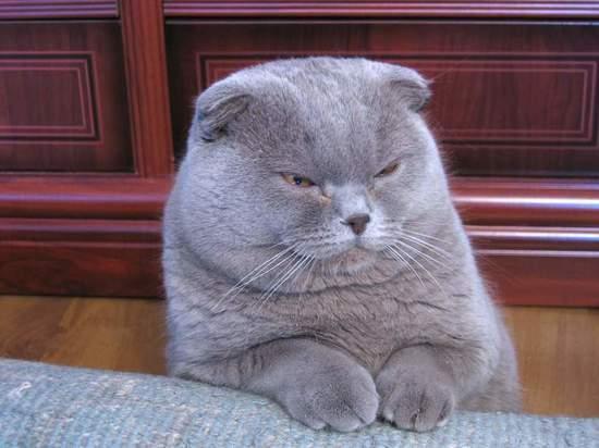 Хозяйка кошки подала иск из-за дисквалификации ее любимицы на выставке