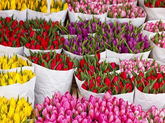 Какие бывают аукционы цветов и почему самые большие в Голландии