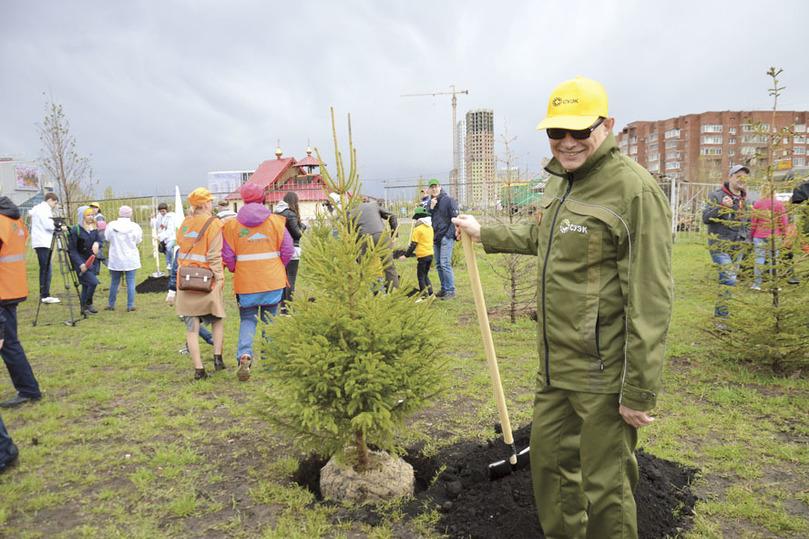 Вечнозеленая сосна — символ жизненной силы Сибири