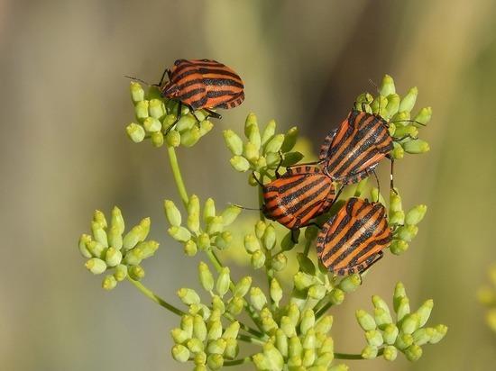 Российские ученые разобрались в принципах эволюции микроскопических насекомых