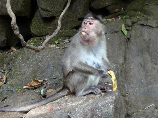 Научно подтверждено, что семья и друзья продлевают жизнь животным