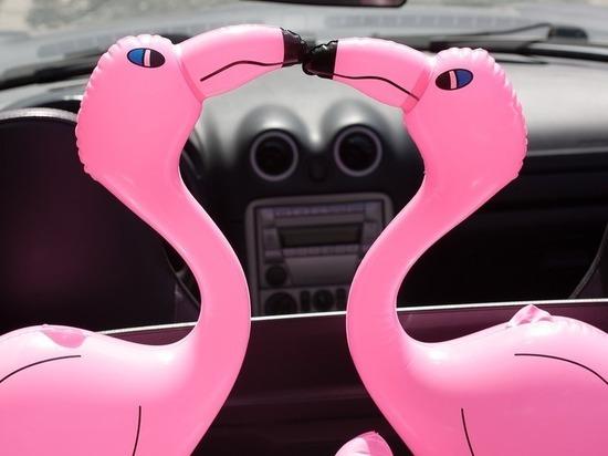 Саратовчанка с надувным розовым фламинго устроила протестную фотосессию в луже