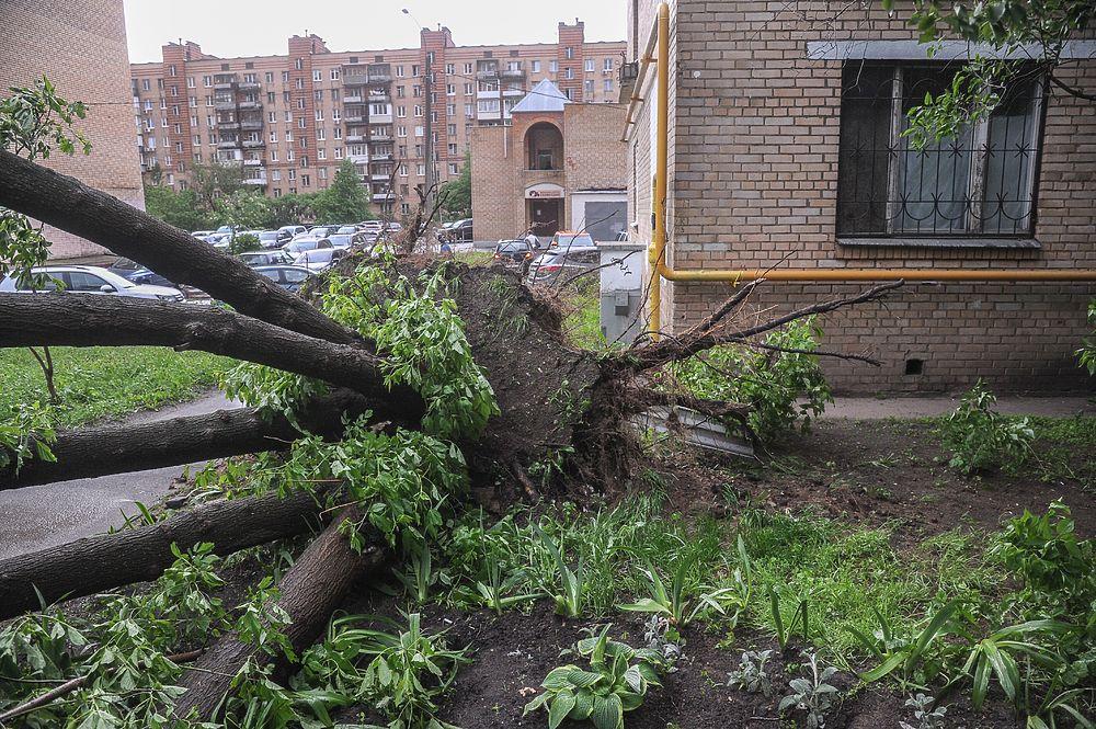 Медведев соболезнует родственникам погибших во время урагана в Москве