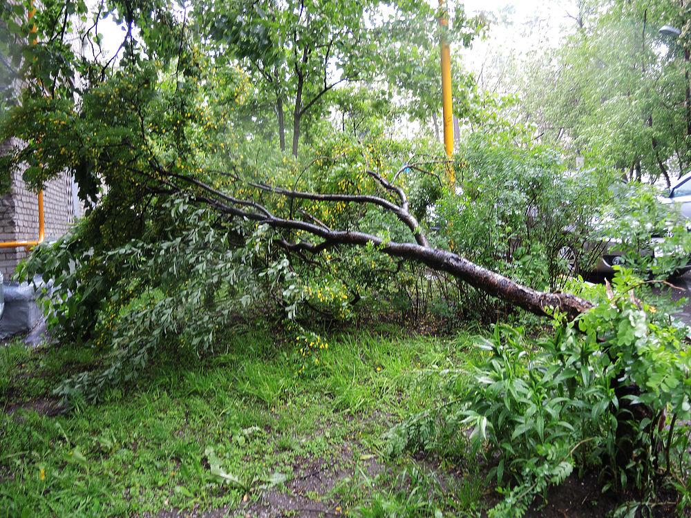 На московский регион обрушился мощный ураган, жертвами которого стали несколько человек