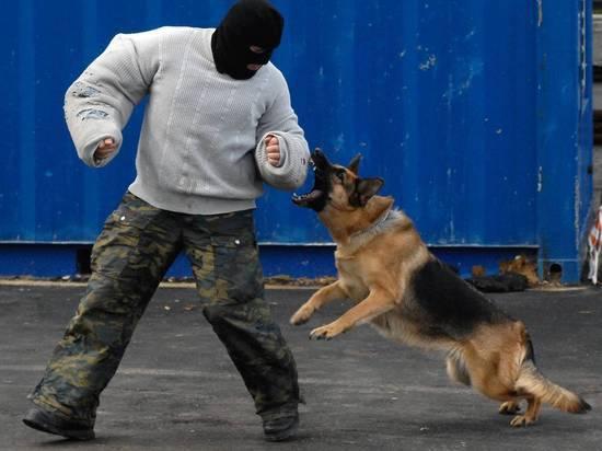 Российское правительство составит список особо опасных пород собак