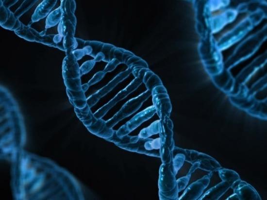 Процесс удвоения ДНК впервые удалось запечатлеть на видео