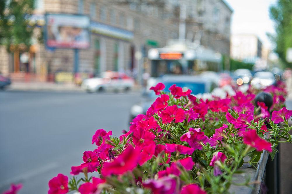 Этим летом в Волгограде планируется высадить до 200 тысяч цветов. Улицы областной столицы уже украсили петуньи, колеусы, разноцветные сальвии, бегонии, пеларгонии, катарантусы и розы.