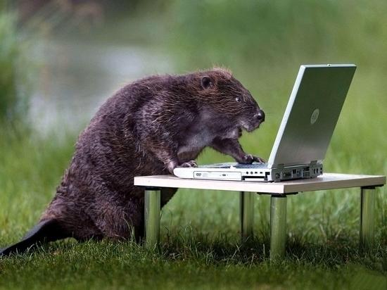 Россияне все активнее используют соцсети для кооперации «на гектаре»