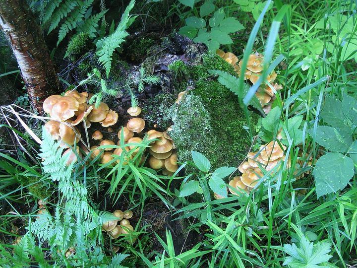 Собрался по грибы — включи Интернет
