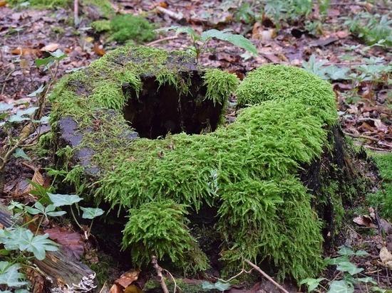 Хозяев дач заставят высаживать срубленные в лесу деревья
