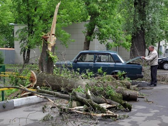 Прокуратура объяснила, почему МЧС не предупредило о московском урагане