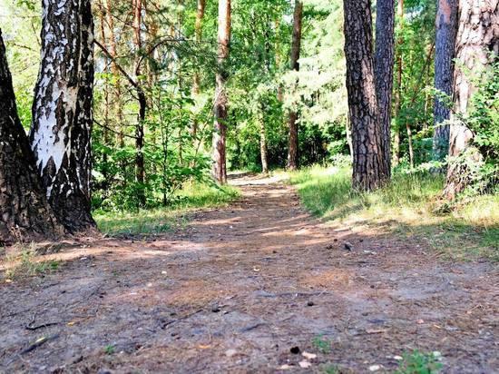 Двухлетний мальчик бродил по подмосковному лесу, пока его не нашли