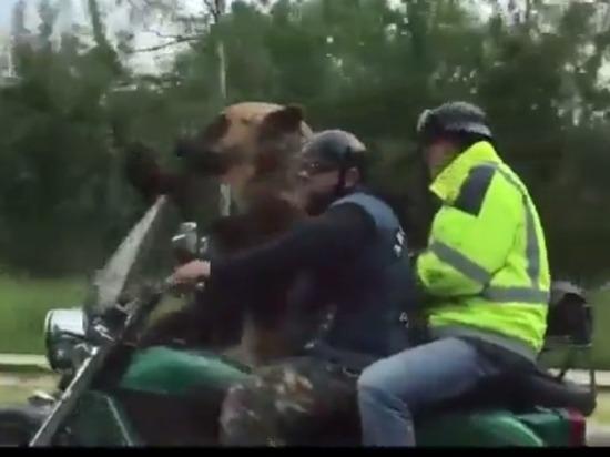 «Только в России»: западную прессу удивил катающийся на мотоцикле медведь
