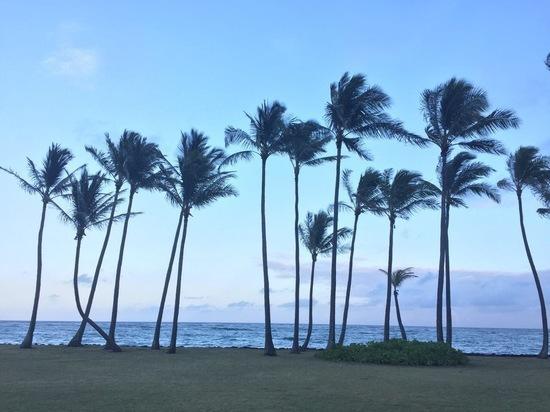 Где Доном пахнет: как Гавайи едва не стали частью России