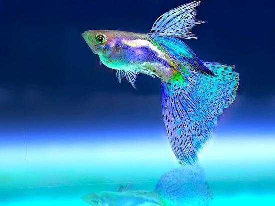 Виновен. жителя Америки  отправили втюрьму заубийство аквариумной рыбки