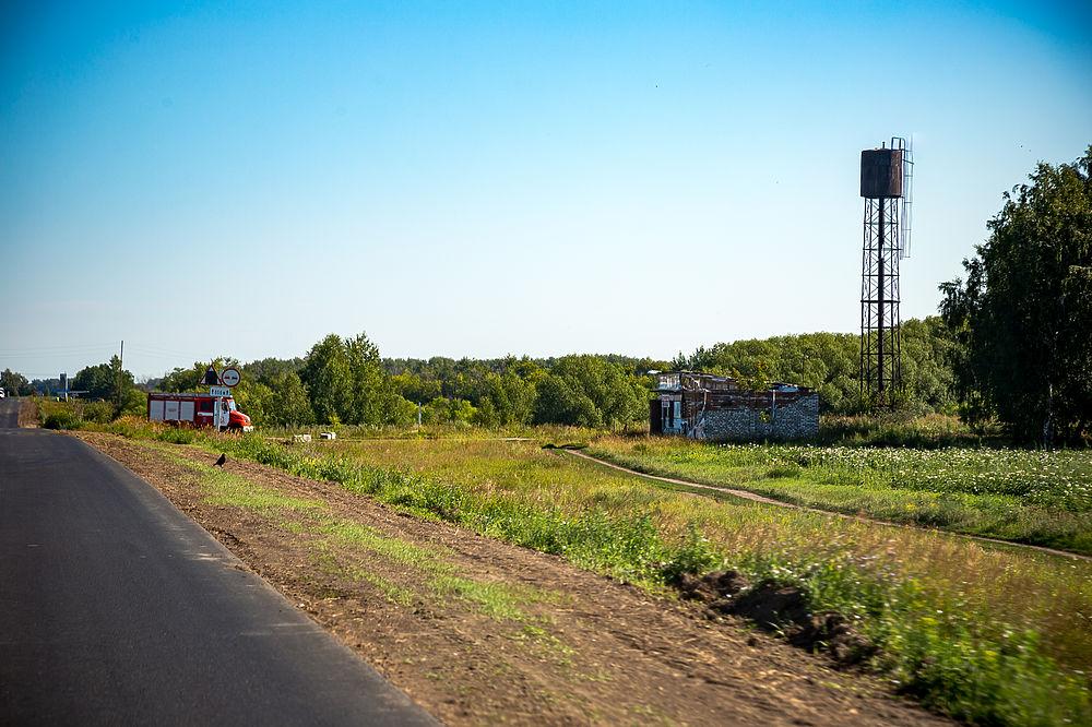 В Омской области массово уничтожают свиней