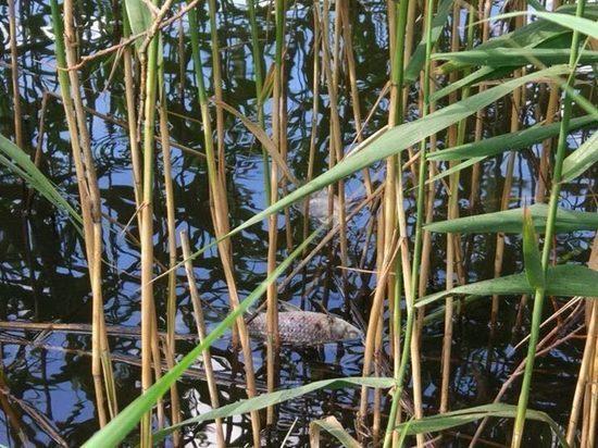 Рыбу в Лебедянском пруду в Москве могли отравить пестицидами