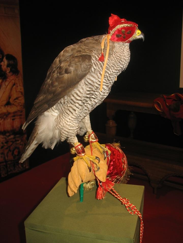 Крылатый убийца для состоятельных господ: открылась выставка, посвященная соколиной охоте