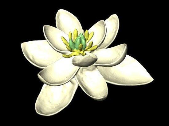 Ботаники выяснили, как выглядели первые цветы на Земле