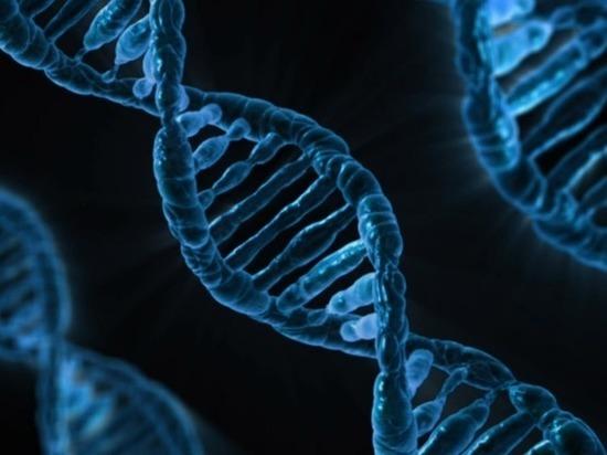 В США впервые отредактировали геном человеческого эмбриона