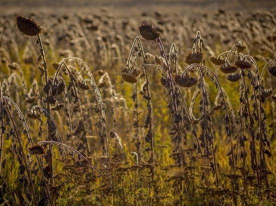 На Украине от жары начали умирать люди